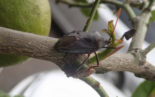 Terminate Apartment Pests