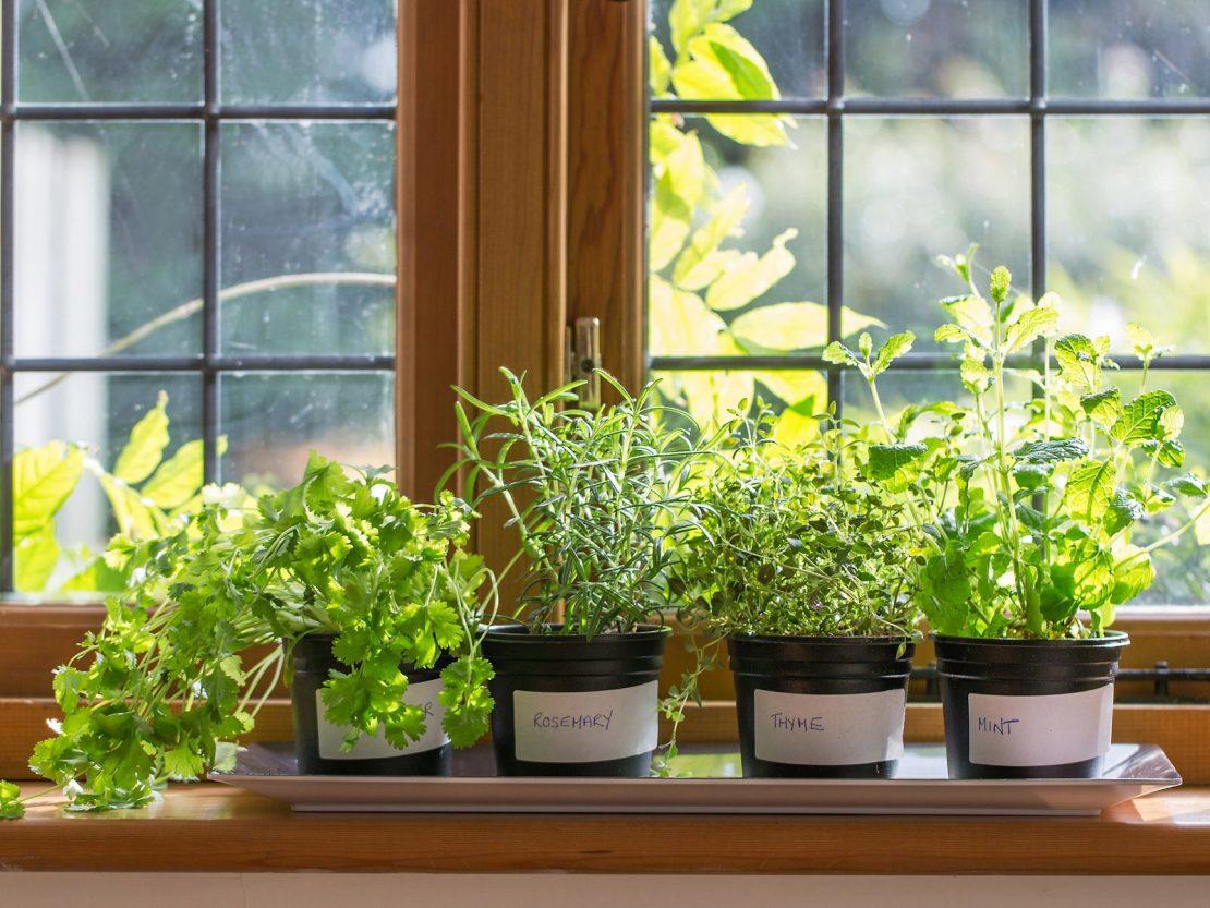 Grow Vertical Veggies in an Apartment ann arbor