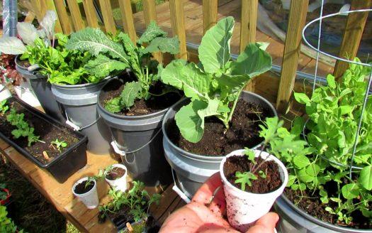 Ann Arbor apartment patio bucket garden
