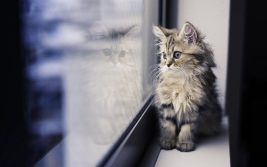 Pet Services for Apartment Dwellers