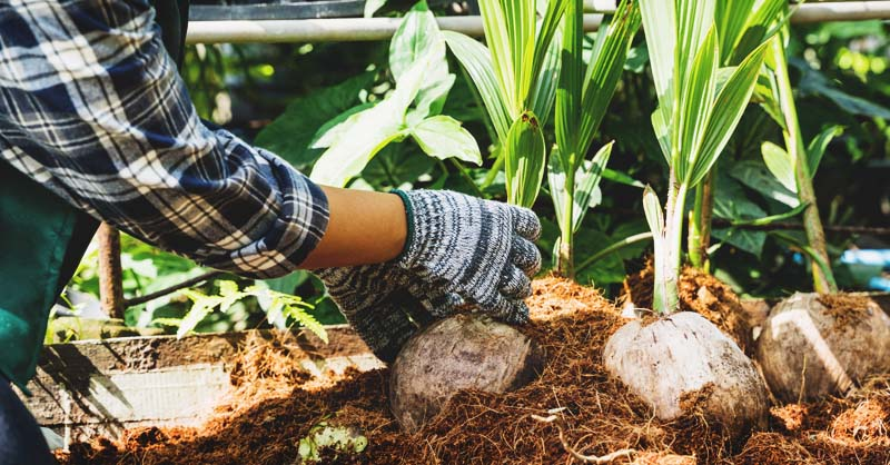 Build Homesteading Skills in Your Apartment